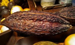 Theobroma cacao. Los 5 Mejores.