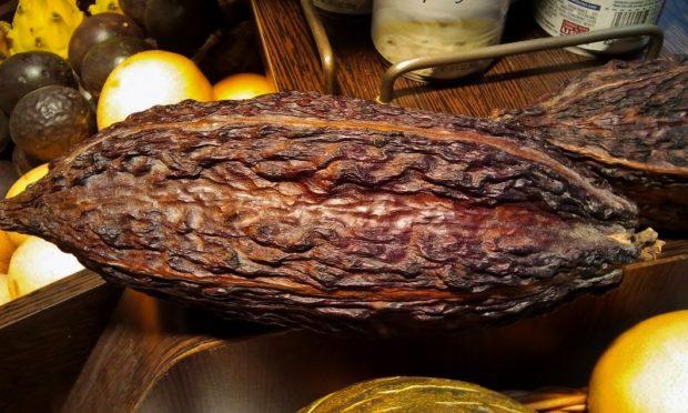 Theobroma cacao Los 5 Mejores