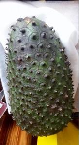 Durian GG. los5mejores