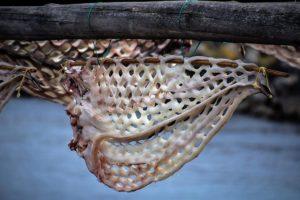 Lemar congrio-secadero-muxia-