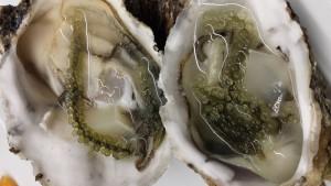 Ostras con uva de mar